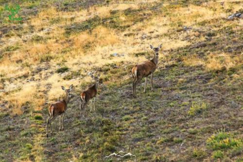 Veado-Verde---Green-Deer-5215