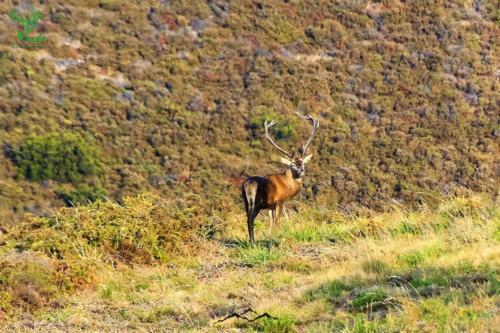 Veado-Verde---Green-Deer-5245