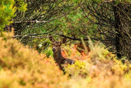 Veado-Verde-Green-Deer-6759