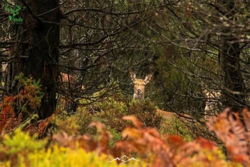 Veado-Verde-Green-Deer-6762