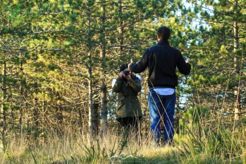 Veado-Verde-Green-Deer-8059